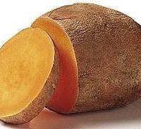 Tatlı Patates (Ipomoea batatas)