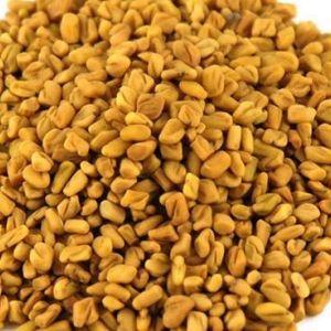 Çemen (Trigonella foenum-graecum)