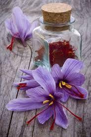 Safran (Crocus sativus)