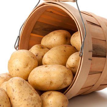 Patates (solanum tuberosum)