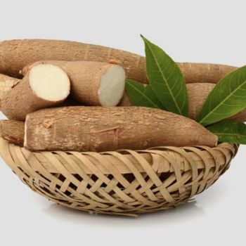 Manyok (Manihot esculenta)