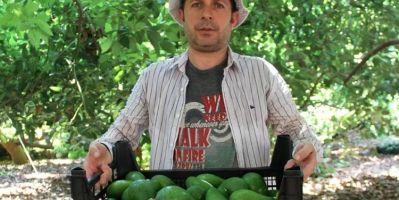 Alanya'da Avokadoda 50 Milyon Rekolte Bekleniyor