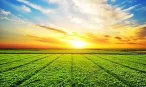 Bekir Pakdemirli: Başarımızla övünmeliyiz tarımda Avrupa'nın lideriyiz!