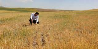 Borç ertelemede TARSİM şartı çiftçinin tepkisini çekti