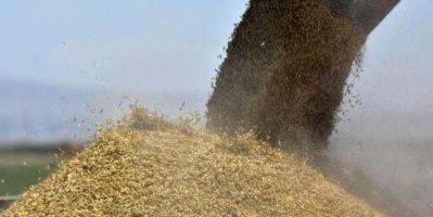 Buğday Ekim Alanlarında Yüzde 10 Gibi Bir Azalma Tahmin Ediyoruz