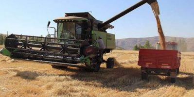Buğday ve Arpa Alım Fiyatı Hakkında!