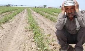 Çiftçi borçlarına çözüm bulunmazsa icra haciz işlemleri Nisan-Mayıs'ta pik yapacak!