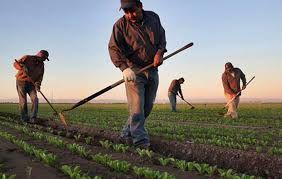Çiftçiden kesilen stopaj vergisi 5 yıl geriye dönük iade edilecek!