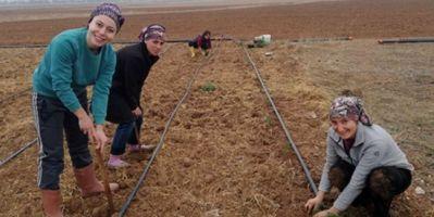 Eskişehir' De Kadın Çiftçilere Alternatif Ürün: Lavanta