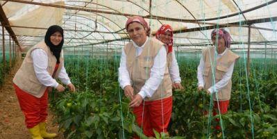 FAO'dan Kadınların İstihdamına Destek!