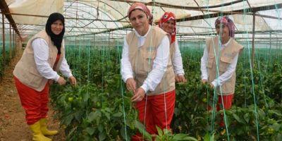 FAO'dan Tarım ve Gıda Güvenliği Çalıştayı!