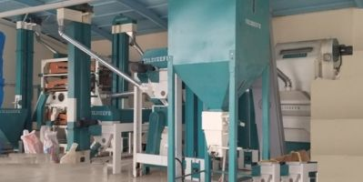 Giresun'da Siyez Buğdayı İşleme Ve Paketleme Tesisi Kuruldu