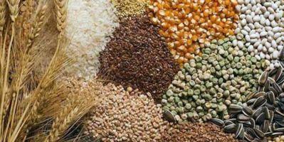 Hububat, bakliyat ve yağlı tohumlarda 2021' in ilk çeyreğinde %6' lık artış
