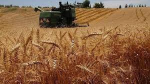 İlçe Tarım ve Orman Müdürlüğü'den hububat ekili araziler için yabancı ot uyarısı