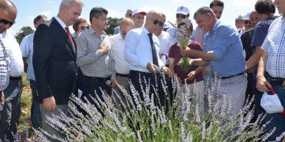 Kekik Üretiminin Başkenti Olan Denizli; Tıbbi Ve Aromatik Bitkilerin Merkezi Olmayı Hedefliyor