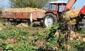 Pancara kota cezası çiftçiyi endişelendiriyor!