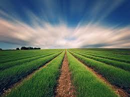 Parçalanmış 6,1 Milyon Hektar Tarım Arazisi Birleştirildi
