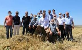 Silivri Belediyesi boş araziyi değerlendirdi tohum ve samanı ücretsiz dağıttı!