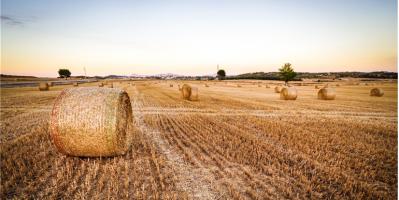 Sürdürülebilir Tarım: Dünya'da ve Türkiye'de Güncel Durum