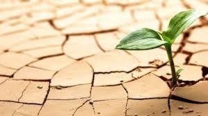 Tarım Bakanı Pakdemirli tarımsal kuraklıkta yaşayabiliriz