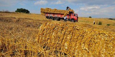 Tarım Bakanlığı açıkladı: Türkiye saman ihraç ediyor!