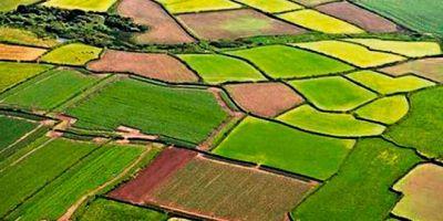 Tarım Bakanlığından önemli duyuru: Hisseli tarım arazilerinin satış işlemleri vergi ve harçtan muaf olacak