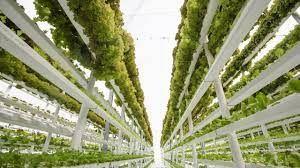 Tarım İl Müdüründen dikkat çeken eleştiri: Tarım arazilerine göz dikenler dikey tarımı konuşuyor!