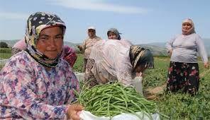 Tarım işçisi kadınlar için araştırma önergesi! Sigorta desteği talebi