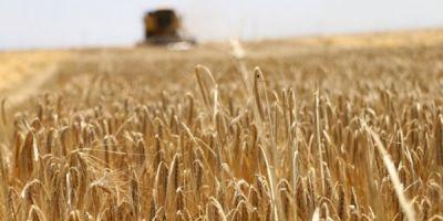 Tarımda Bilinçsiz Yapılan İlaçlama Çiftçiyi Perişan Ediyor
