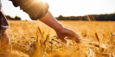 Tarımda 'Uzman Ellere' 100 bin lira hibe desteği!