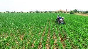 Tarımda yaşanan sorunlarla ilgili Cumhurbaşkanına verilmek üzere kapsamlı rapor hazırlandı