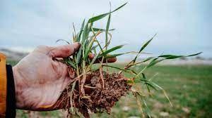 Tarımdan Haber gündeme getirdi kuraklık desteği kararnamesi yayınlandı!
