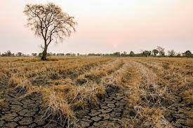 TARSİM'den çiftçiye 214 milyon lira kuraklık ödemesi
