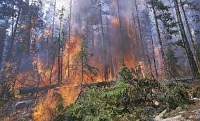 Tarsim'den orman yangını açıklaması: Hasar tespit çalışmaları sürüyor