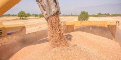 TMO 300 bin ton buğday ithalatı ihalesinde teklifleri aldı