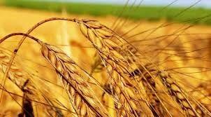 TMO Genel Müdürü: En ucuz buğdayı Türkiye ithal etti Ocak-Şubat'ta fiyatların ne olacağını bilmiyoruz!