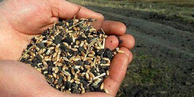Tohum Üretimimiz 1 Milyon 50 Bin Ton Oldu