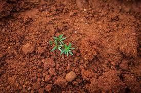 Toprak analiz desteği ne kadar hangi şartlarda alınacak?