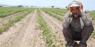 Torba Kanun Resmi Gazete'de yayınlandı çiftçinin bütün umutları yok oldu!