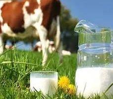 Ulusal Süt Konseyinde üreticiyi temsilen bir kişi kaldı